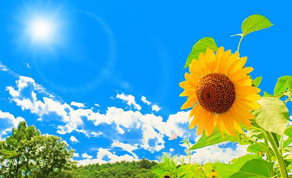 夏の節電対策について