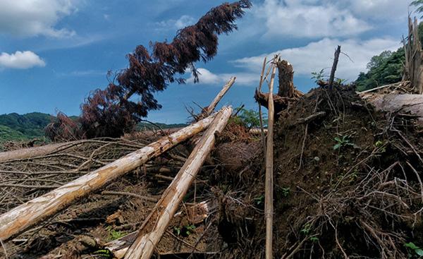 災害時の新電力の対応について