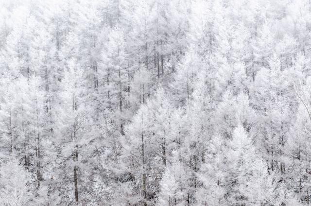 この冬の電気は「過去10年で最も厳しい見通し」